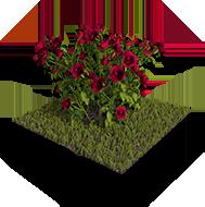 Φυτώρια Φυτά Γκαζόν
